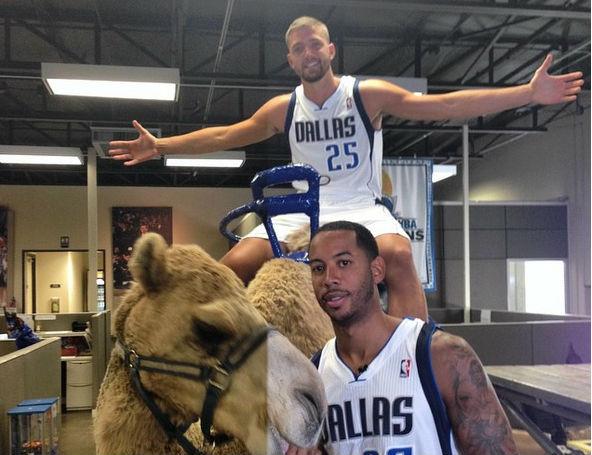 parsons camello