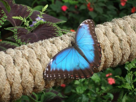 And a rather fetching butterfly.