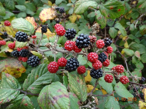 Brambles still looking good