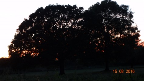 Sunset through the tree's
