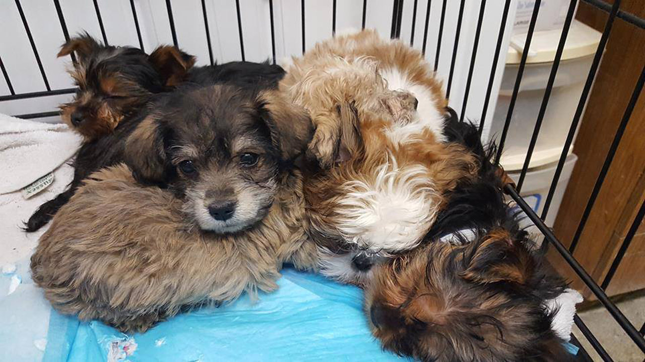 rescued-puppies_236950
