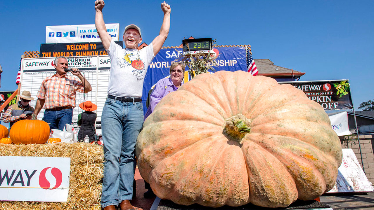 giant-pumpkin_357040