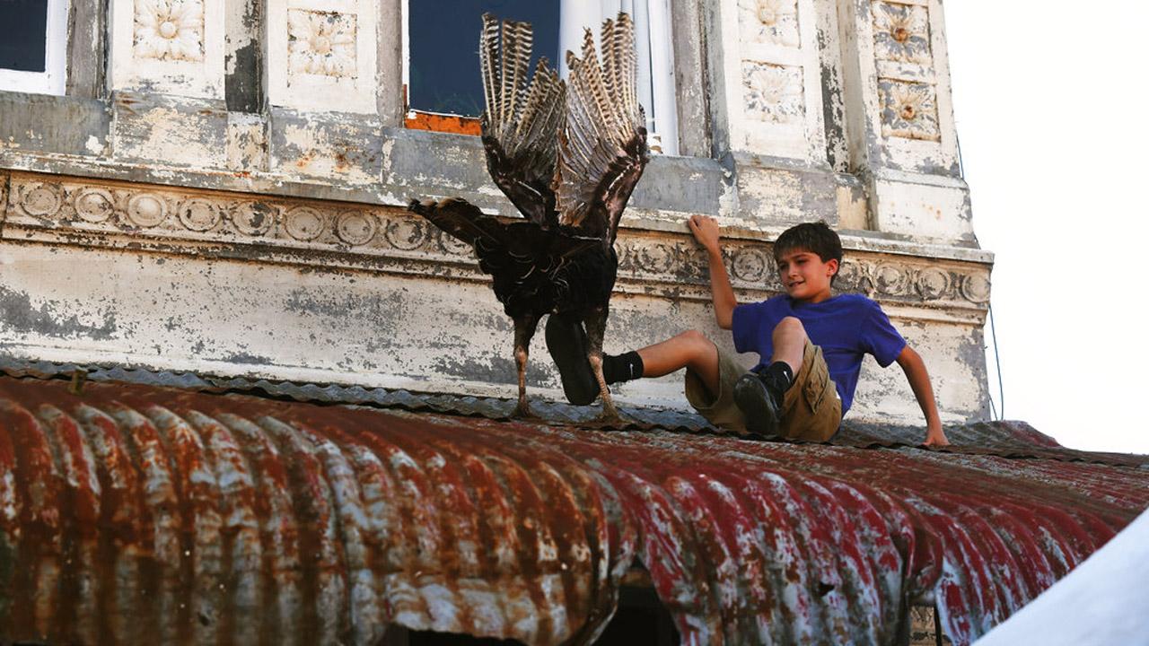 turkeys_358053