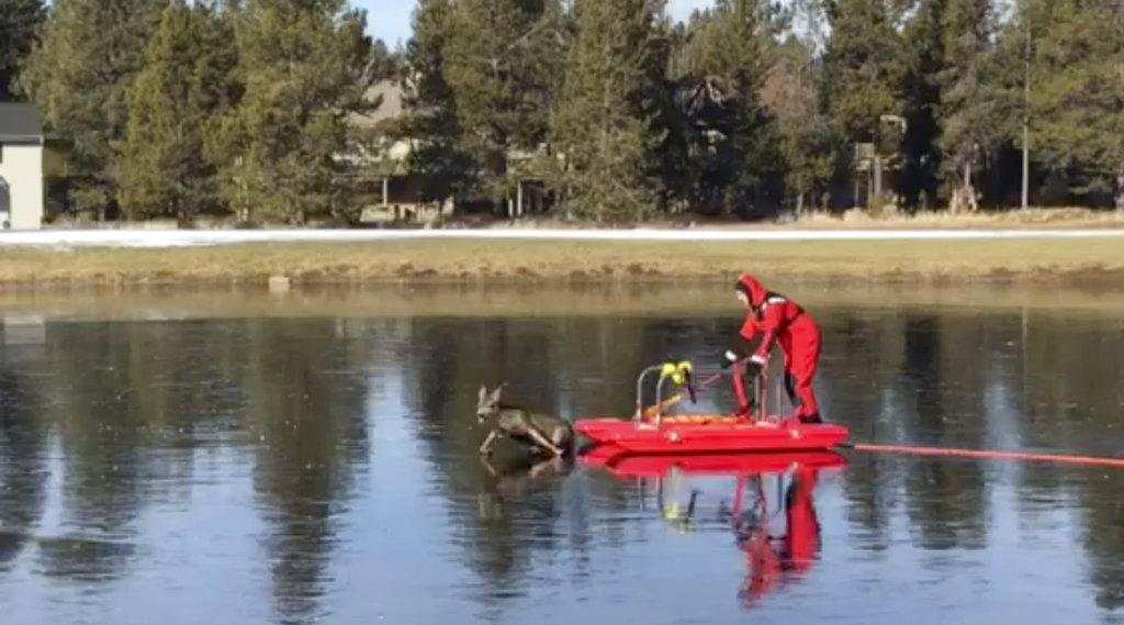Ice Rescue Deer_371486