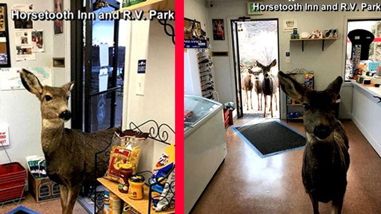 deer-visits-store_374522