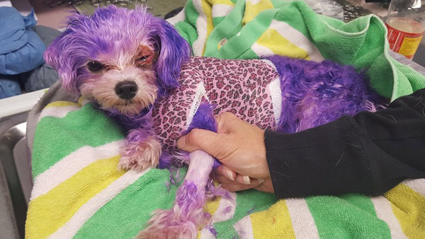 PHOTOS: Dog named Violet almost dies from burns caused by ...