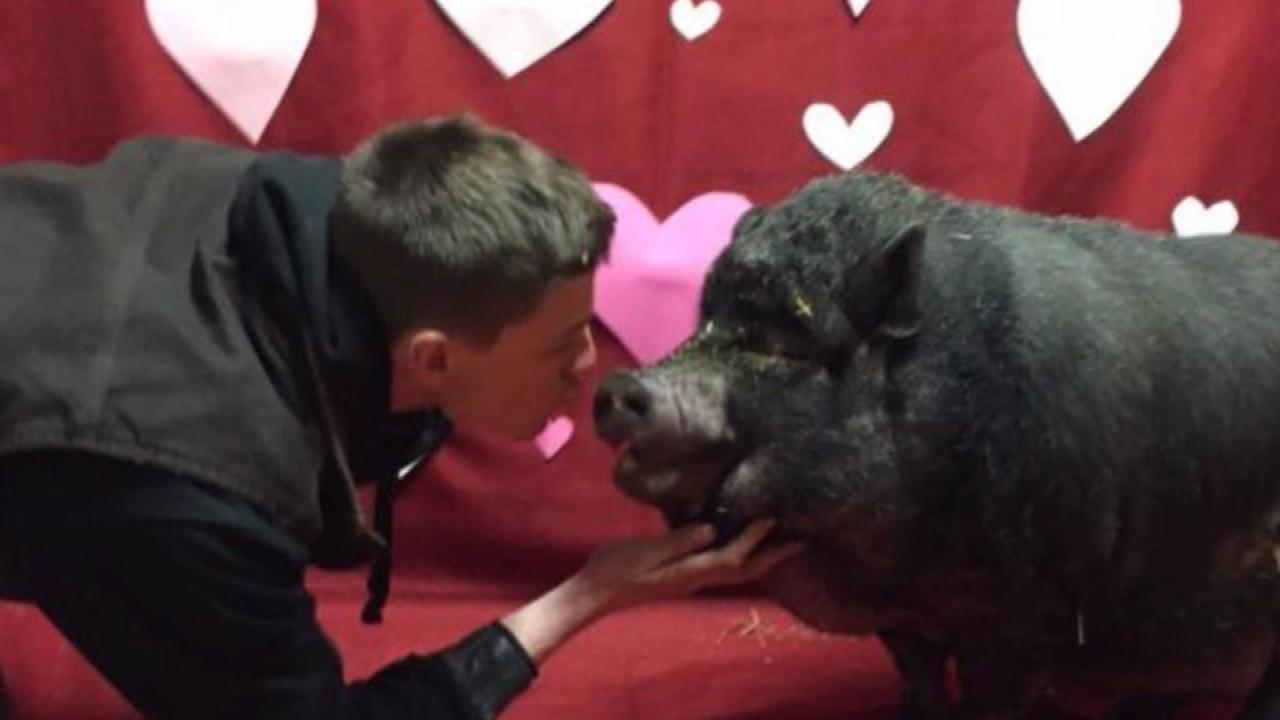 020618_valentine_animals_web_388898