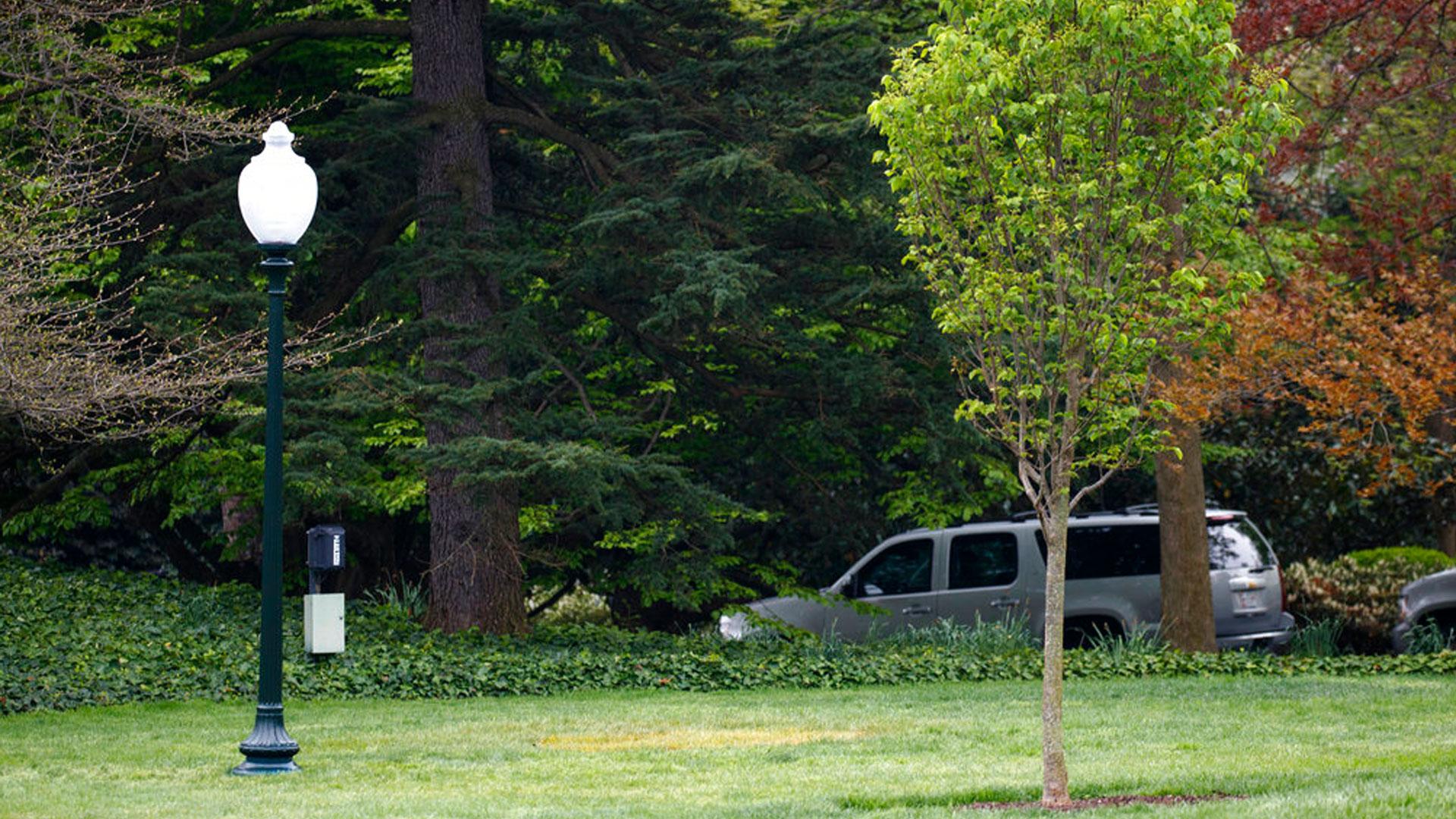 missing-oak-tree_1525074001962.jpg