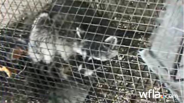 Teacher_accused_of_drowning_raccoons_dur_0_20180516125206