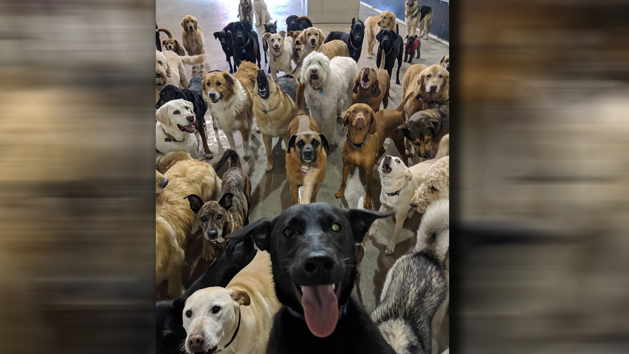 "Dog ""Selfie"" at Ohio doggie daycare goes viral"