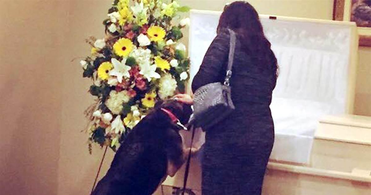 grieving-dog-today-tease-180510_9a169ce4c5d8630f3d5217cc3edced0e.1200_1525997038642.jpg