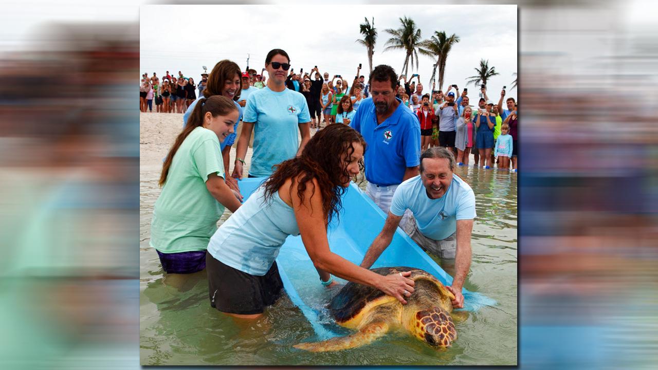 turtle-turtle_1526252265365.jpg