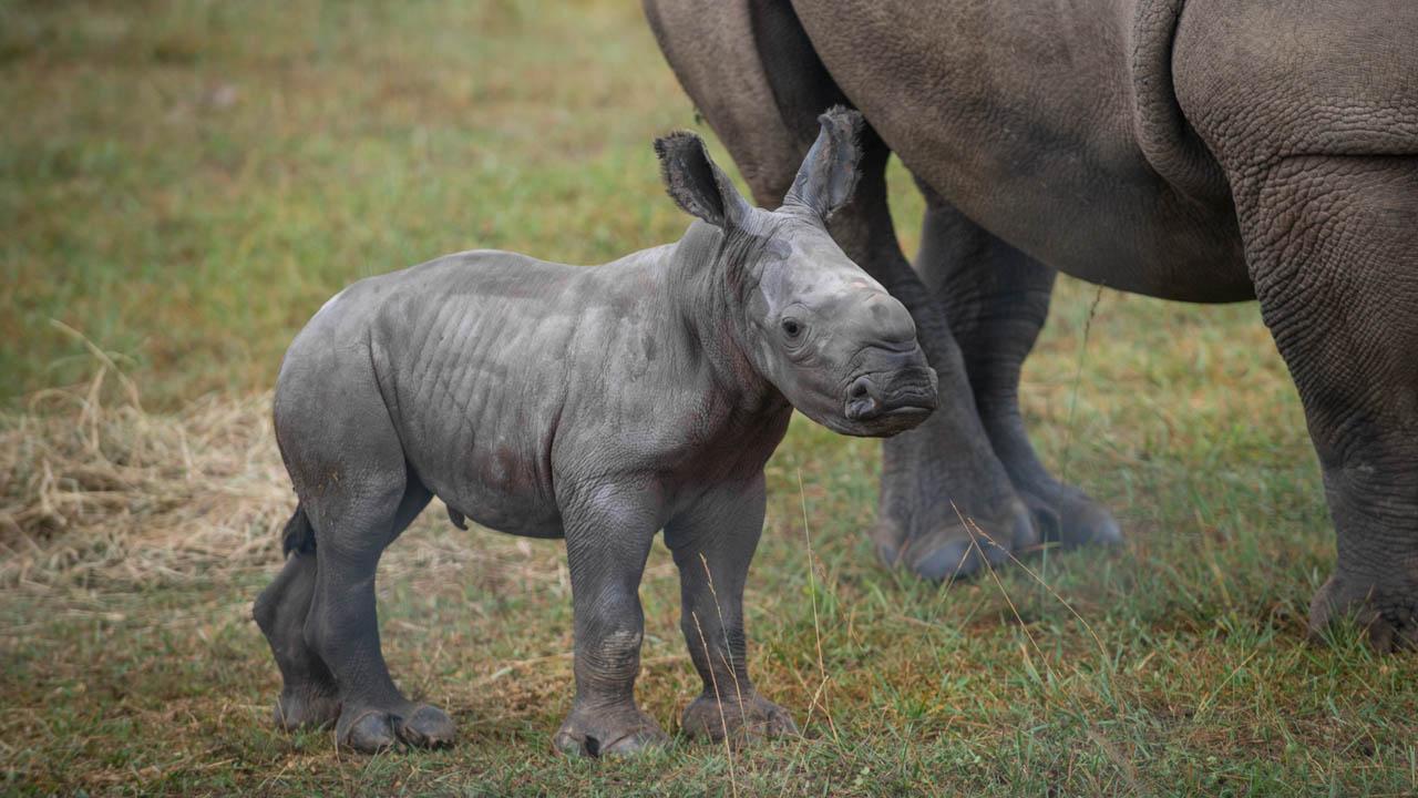 rhino_357124
