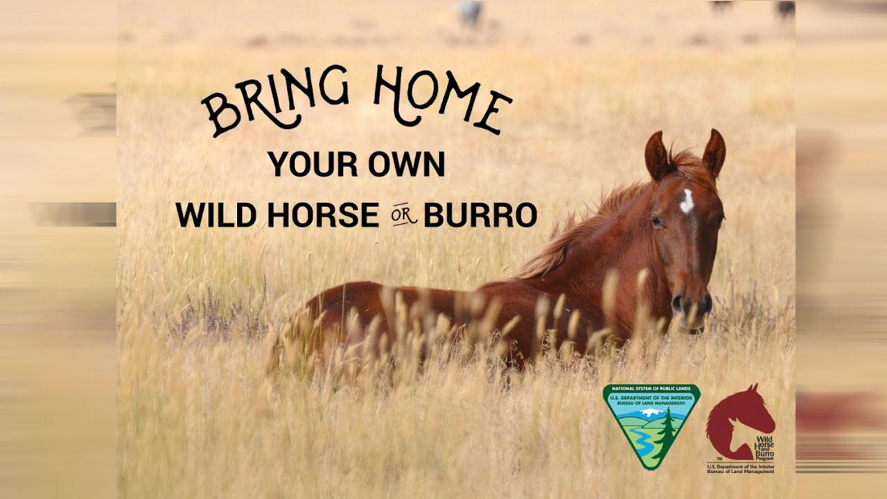 wild horses_1539422656270.jpg.jpg