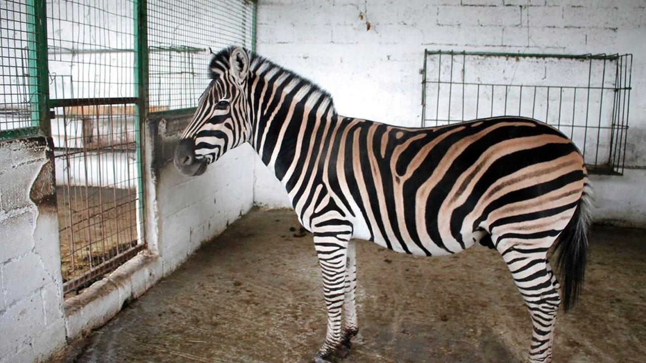 zoo-malnourished_1540747031397.jpg