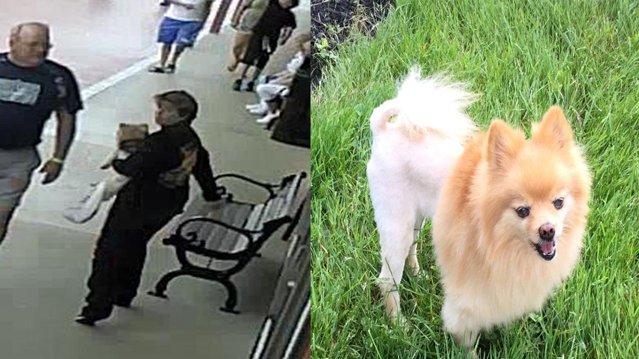 stolenb dog correct_1541280347787.jpg.jpg