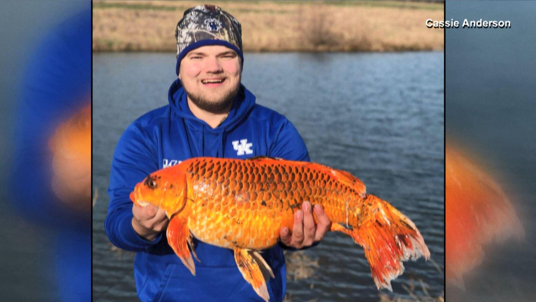 giant goldfish_1550076806521.JPG-846652698.jpg