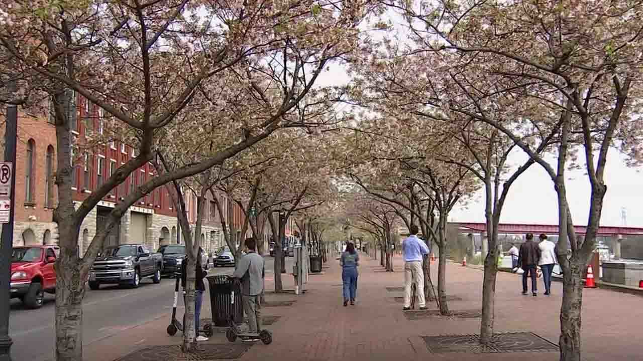 Nashville mayor: Trees will be relocated for NFL draft stage