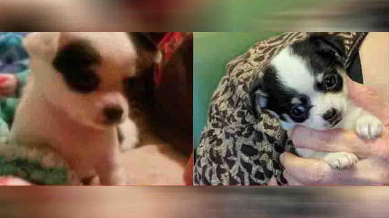missing puppies pic_1553351012223.JPG.jpg