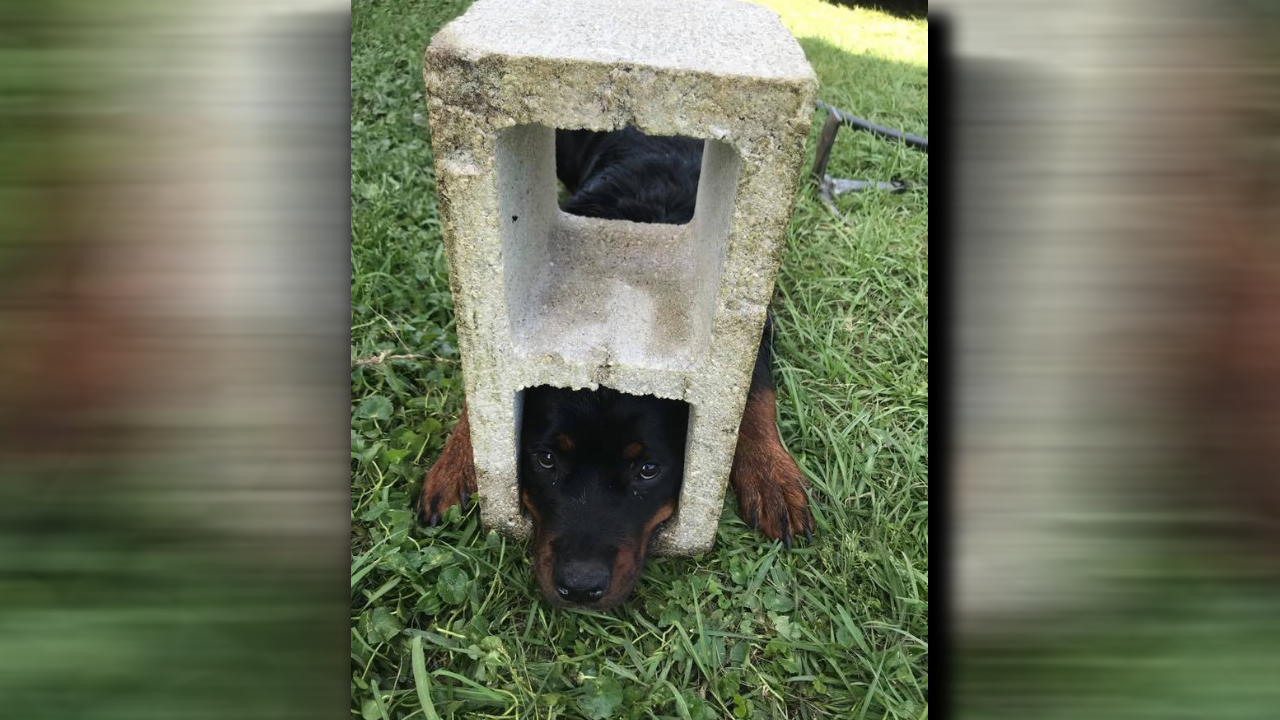 dog stuck_1556038166501.jpg.jpg