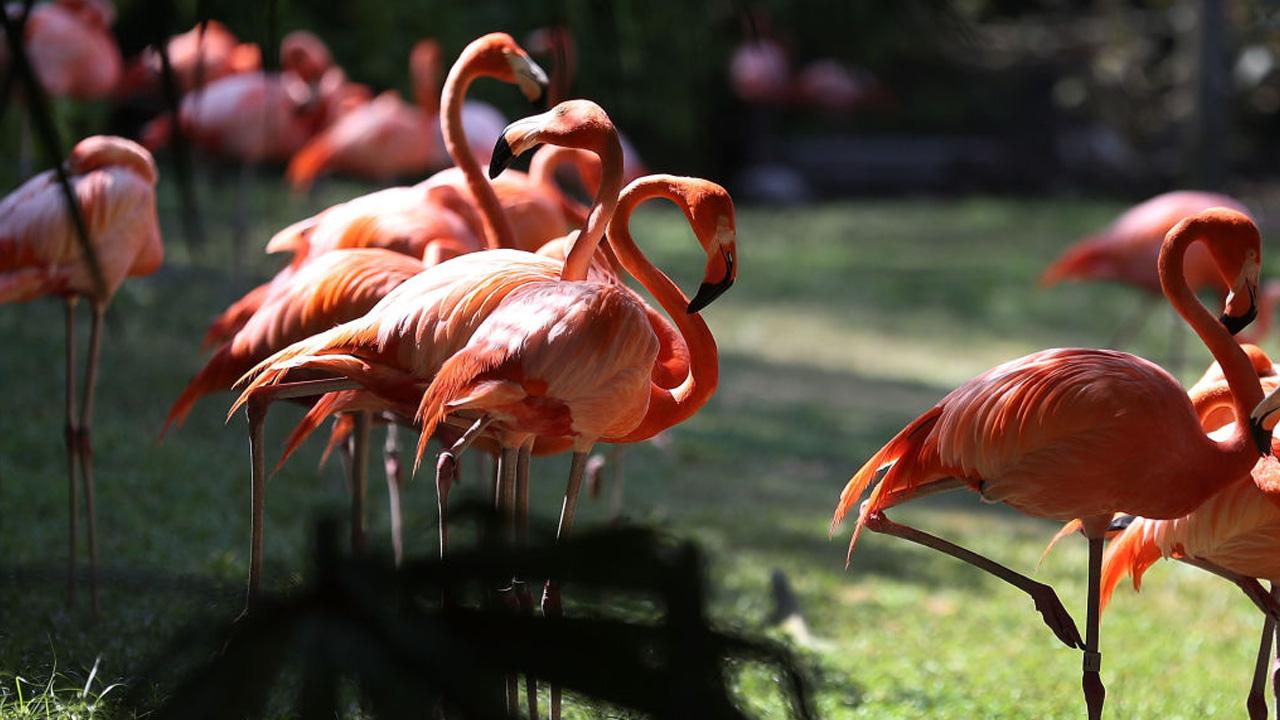 flamingo_1558530597092.jpg