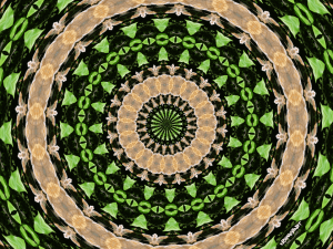 Turkey tail mushrooms mandala