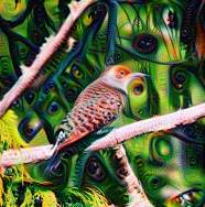Flicker botanical deep dream