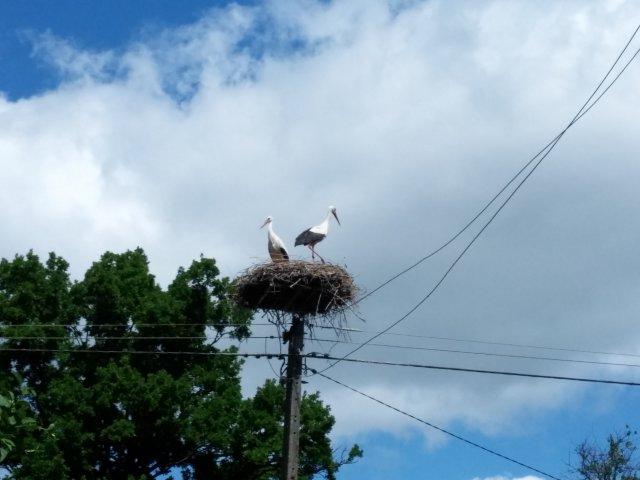 Eines von unzähligen Storch Nestern