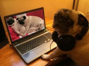 Pug-caught-watching-pug-porn