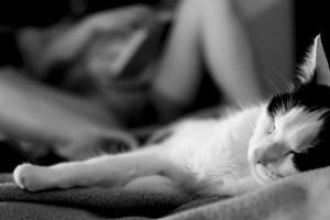 Katten en poesjes