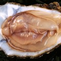 Voedsel als afrodisiacum – de waarheid achter deze mythes
