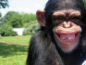 Anticonceptie-gel voor mannen werkt bij apen