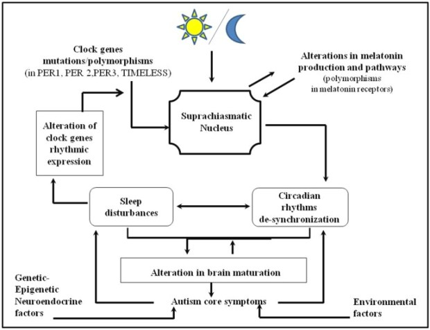 Circadian rhythms disruption in autism
