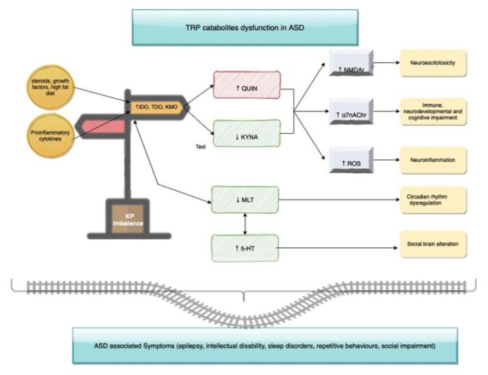 Кинуренин (КП) как перекресток между нарушенными маршрутами и патофизиологическими состояниями, связанными с расстройством аутистического спектра (РАС).