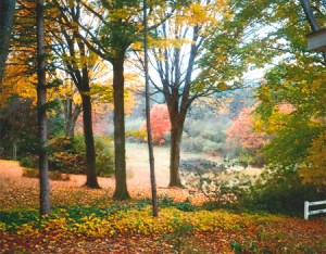 margaret-price-fall-scene-honorable-mention