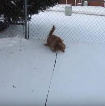 My 4 legged Drive Dog