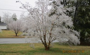Ice Storm of January 12, 2019