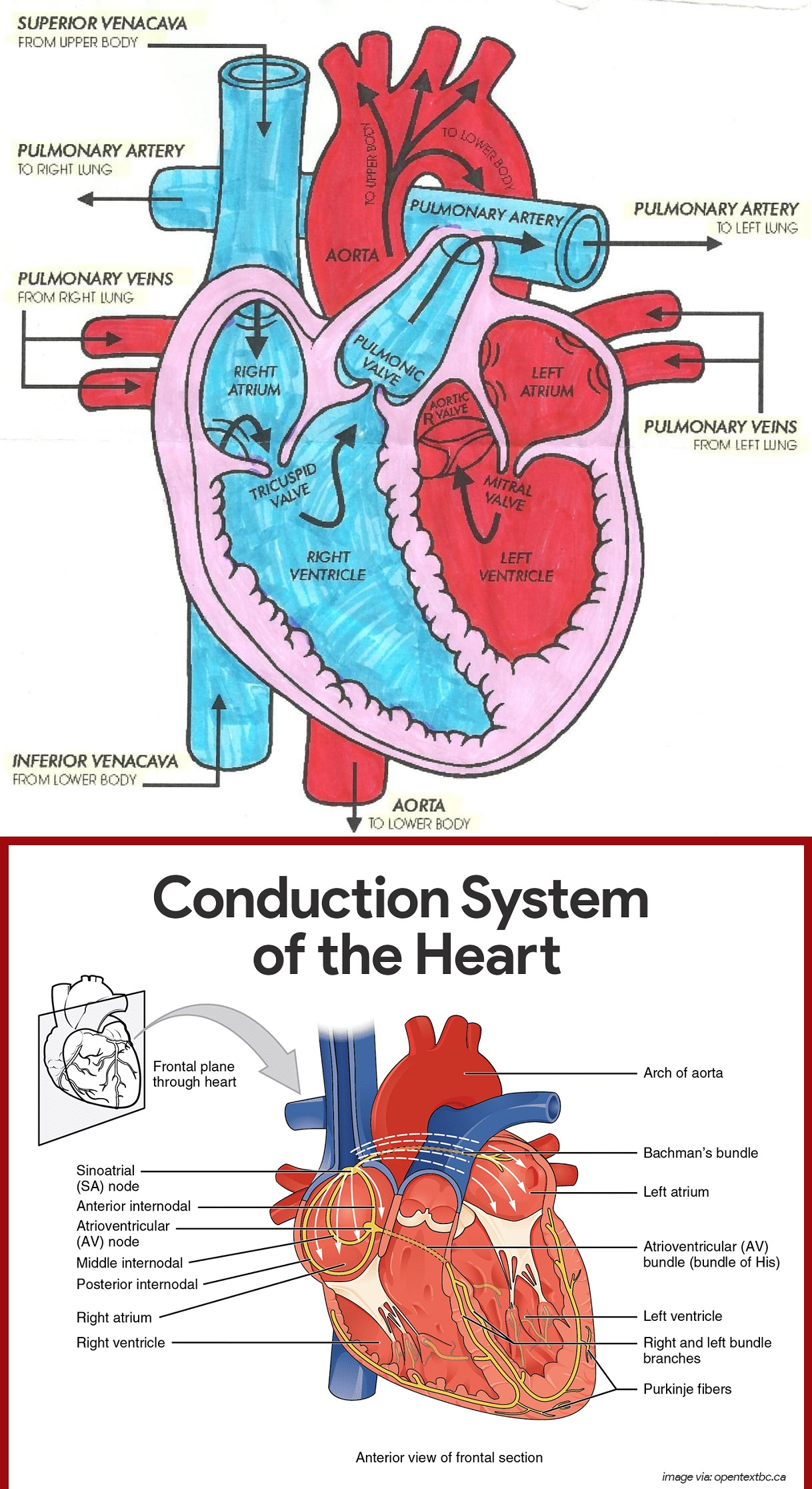 Diagram Of Heart Blood Flow For Cardiac Nursing Students