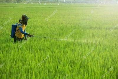 Agriculture : lutte contre les ravageurs au Sénégal et en Mauritanie