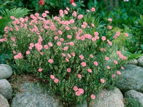 gartengestaltung pflegeleichte pflanzen pflegeleichter garten mit den richtigen pflanzen | ndr.de