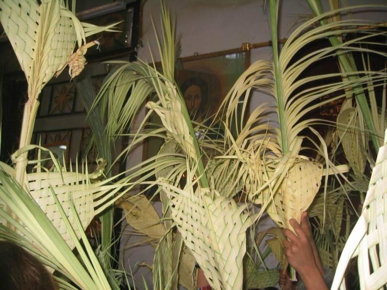 Palmwedel in Berba