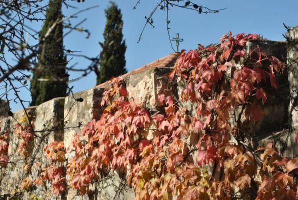 Chapel Autumn