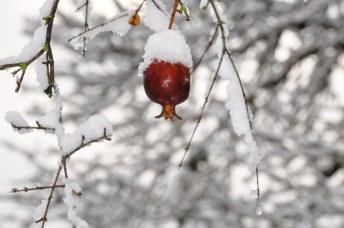 snow_in_ein_karem_03