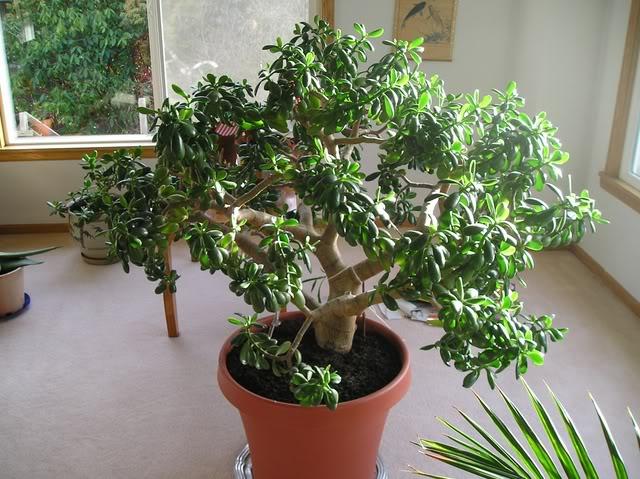 Baby Succulents Sale