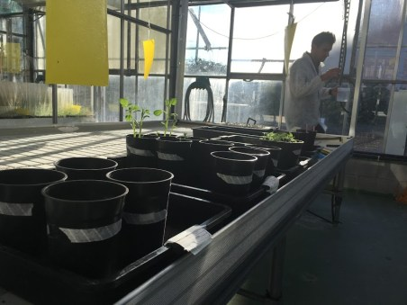 invernaderos fitotoxicidad