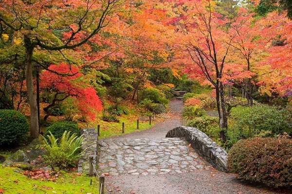 Wild: photo of Fall in the Japanese Garden in Seattle's Arboretum.