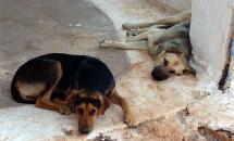 Δωρεάν πρόγραμμα εμβολιασμών, στειρώσεων και ηλεκτρονικής καταγραφής αδέσποτων ζώων