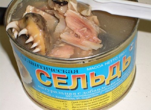 Russian Catfish