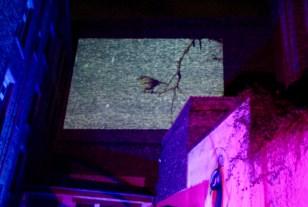 Die Pfaubar: Spannende Lichtprojektionen im Hinterhof | Foto: Klaviermusik bei Sasas Vintage | Foto: Alisa Klaiber