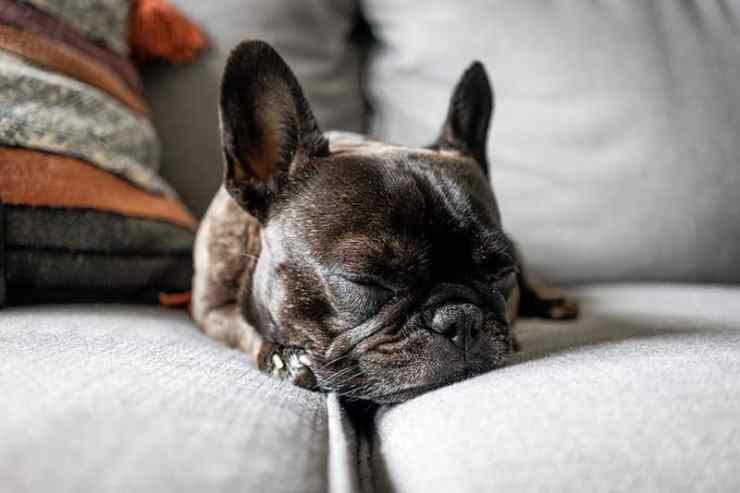 Dogs and Sleep